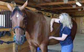 Нормальная температура тела у лошадей