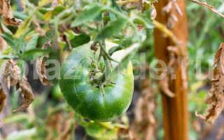Как заставить помидоры покраснеть