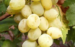 Новые гибридные формы винограда