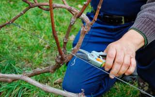 Сроки обрезки винограда осенью в украине