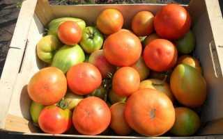 Как сохранить спелые помидоры