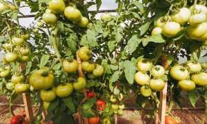 Посадка помидор по методу блокина мечталина