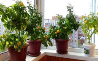 Семена томатов для балкона