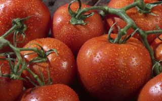 Чудо помидор катрина f1