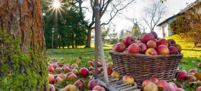 Чем лучше опрыскивать деревья и кустарники осенью