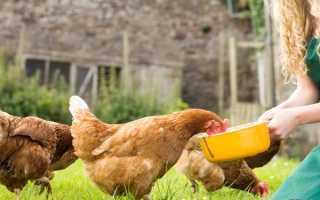 Сколько курица должна съедать в сутки
