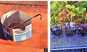 Подробный рецепт микробного раствора бессараба