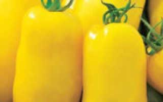 Золотое руно помидоры описание