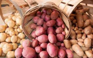 Картофель на зиму сорта хорошие