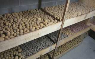 Картофель для зимнего хранения