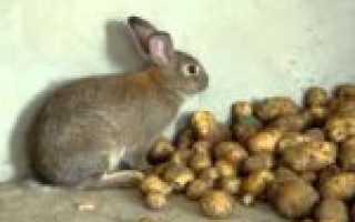 Кроликам давать сырой картофель или вареный
