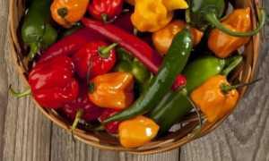 Стручковый перец относится к какой группе овощей