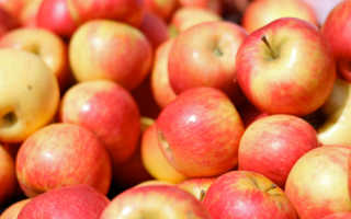 Хоней крисп сорт яблок