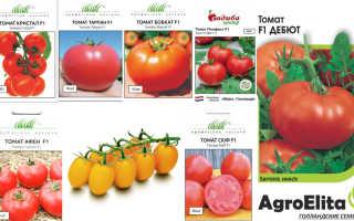 Голландские сорта томатов для теплицы из поликарбоната