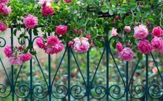 Опоры для плетущихся роз