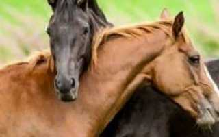 К чему снится лошадь во сне мужчине