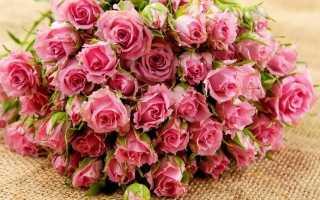 Размножаю розы методом бурито