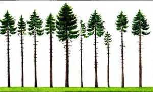 Два растения одного вида примеры