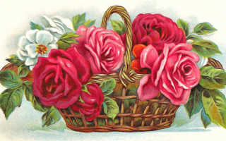 Роза в горшке рисунок