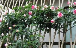 Подставка под розы плетистые