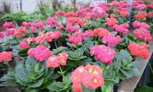 Растения волгоградской области фото и названия