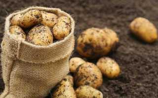 Чем удобрять картофель при посадке