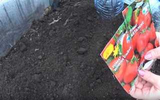 Сорта томатов безрассадным способом