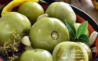 Соленые зеленые помидоры на зиму простой рецепт