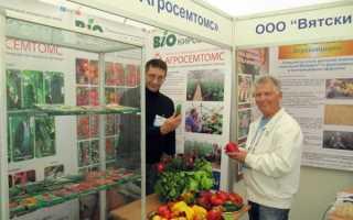 Сорта томатов для кировской области отзывы
