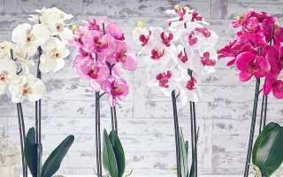 Уход за орхидеей в зимний период