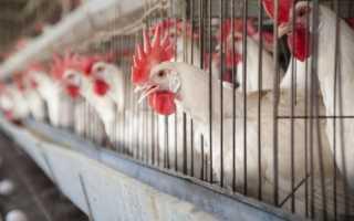Как зарубить курицу и разделать видео