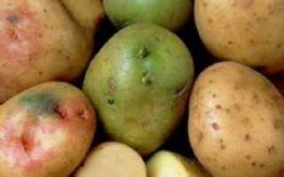 Почему клубни картофеля на свету зеленеют