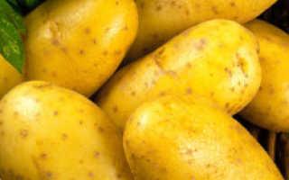 Картофель уладар характеристика сорта отзывы вкусовые качества