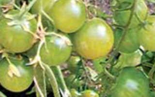 Почему помидоры горькие в теплице