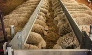 Сколько сена съедает овца в день