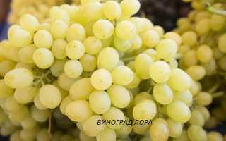 Сладкие крупные сорта винограда