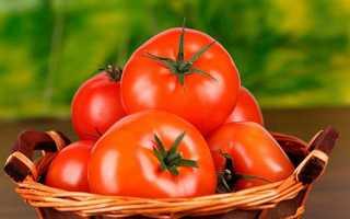 Как получить большой урожай помидор