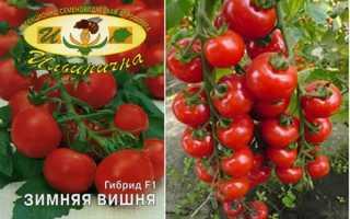 Сорт томата зимняя вишня