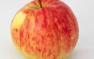 Сорт яблок осенняя радость
