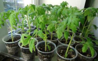 Как садить помидоры на рассаду видео