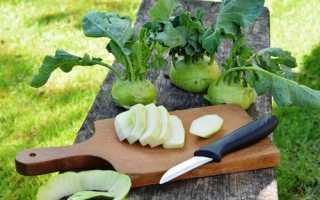Капуста кольраби рецепты приготовления салатов на зиму