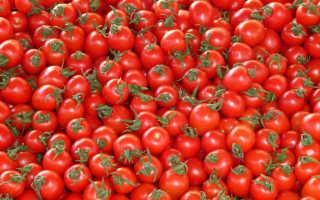 Где выращивают помидоры в России