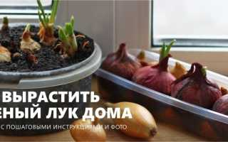 Как правильно сажать лук дома