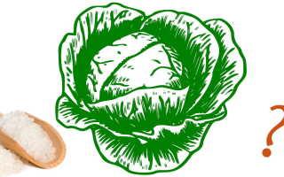 Сколько нужно соли квасить капусту на 5кг