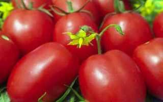Томат глория отзывы фото урожайность