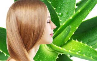 Экстракт алоэ для волос применение