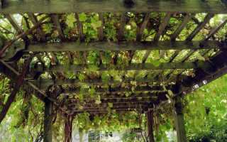 Навес для винограда своими руками фото