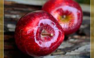 Тёмно красные сорта яблок