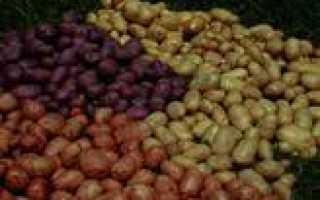 Сколько стоит семенной картофель