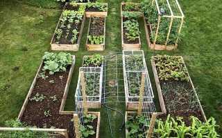 Красивые грядки на огороде своими руками фото